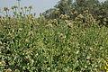 Ein Afeq Nature Reserve (3409003727).jpg
