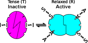 Schema of an allosteric transition in an enzyme