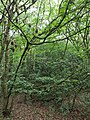 Epping Forest 20170727 112746 (49374629176).jpg