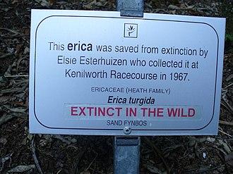Erica turgida - Image: Erica turgida sign