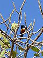 Ethiopie-Wukro-Oiseau.jpg