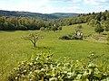 Etzenrot Dorfwiesen.jpg