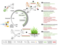 Evolutionary history of microbe-microbe and plant-microbe interactions.webp