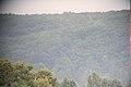 FOREST 2011-06-30 16-29-41 - panoramio.jpg