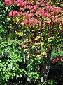 Fall colors (6175576595).jpg