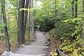 FallingWaters fall colors - panoramio (25).jpg