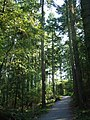 Family cycle trail, Tower Wood, Haldon - geograph.org.uk - 238723.jpg