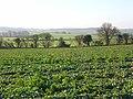 Farmland, Ipsden - geograph.org.uk - 688174.jpg