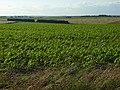 Farmland near Stonehenge - geograph.org.uk - 491357.jpg