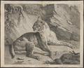 Felis pardus - 1700-1880 - Print - Iconographia Zoologica - Special Collections University of Amsterdam - UBA01 IZ22100350.tif