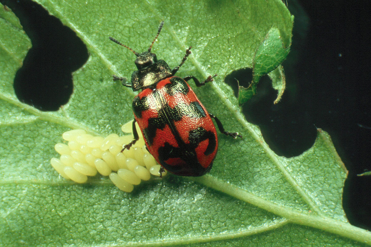 Climate change: Heatwaves 'halve' male insect fertility ...  |Insecta Insects