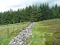Fence and old dry stone wall - geograph.org.uk - 1388129.jpg