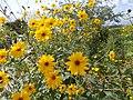 Fiori nel giardino della casa di Monet - panoramio.jpg
