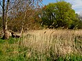 Fischland, Dierhagen13.jpg