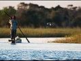 Fishing ( pied kingfisher) (6226853168).jpg