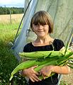 Flickr - Per Ola Wiberg ~ mostly away - Rosenhill ~ Bella med majs (Bella with corn).jpg