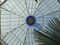 Flickr - brewbooks - Bismarckia nobilis in Palm House (1).jpg