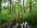 Flooded path in the Teufelsbruch swamp 3.jpg