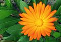 Flor Silvestre en Zacatecas.jpg