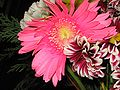 Flores 044.jpg