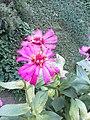 Flower(2).jpg
