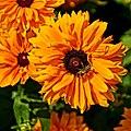 Flower ^1 - Flickr - Stiller Beobachter.jpg