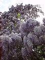 Flower 04374 n.JPG