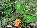 Flower dsc07584.jpg