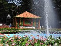 Flower show-19-cubbon park-bangalore-India.jpg
