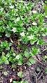 Flowers-Emma YSU 16.jpg
