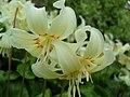 Flowers in Tintinhull gardens - geograph.org.uk - 1255964.jpg
