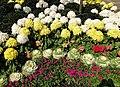 Flowers in Yangmingshan Park 01.jpg