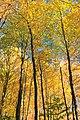 Foliage Walk (5) (30350140595).jpg