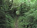 Footpath from Treriffith to the Witches Cauldron - geograph.org.uk - 54763.jpg