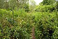 Footpath through the nettles by the Thames - geograph.org.uk - 1401954.jpg