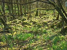 Image illustrative de l'article Parc national des Forêts de Champagne et Bourgogne
