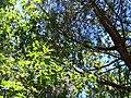 Forêt de la Coubre 009.jpg