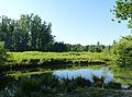 Forêt de la Robertsau-Ile aux tarpans.jpg