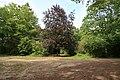 Forêt domaniale de Bois-d'Arcy 55.jpg
