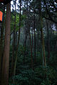 Forest in Fushimi Inari Shrime (11280208404).jpg