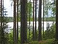 Forest in an Esker near Lake Heiniö, Pieksämäki - panoramio.jpg