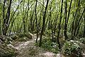 Forest near Boka.jpg