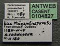 Formicoxenus provancheri casent0104827 label 1.jpg