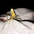 Frederick The Mantis.jpg