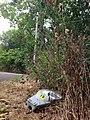 Fruit of the street light tree (25911632441).jpg
