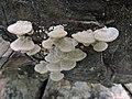 Fungus DSCN9188.jpg