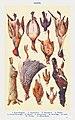Game II. Cock Widgeon, Dumb bird, Blackbird, Pintail, French Partridge, Rabbit, Guinea Fowl, Partridge, Lark, Thrush, and Black Game. Mrs. Beeton Household Management 1923.jpg