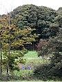 Game bird feeders - geograph.org.uk - 1012520.jpg