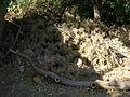 Garden Way - Wall - trees - streamlet - 17 Shahrivar st - Nishapur 40.JPG