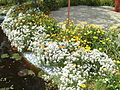 Garden of flowers - Flickr - Swami Stream.jpg
